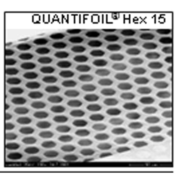 Quantifoil mit hexagonalen Öffnungen